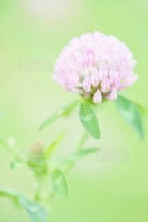 自然の写真・画像素材[53098]