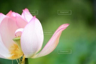 自然の写真・画像素材[53500]