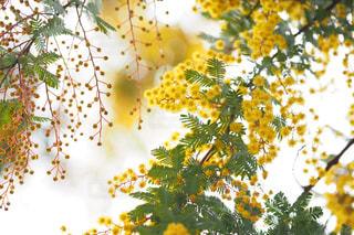 近くの花のアップの写真・画像素材[1114324]
