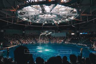 イルカの写真・画像素材[584422]