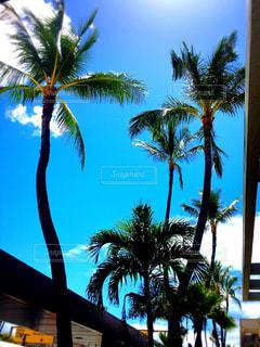 ハワイ - No.614051