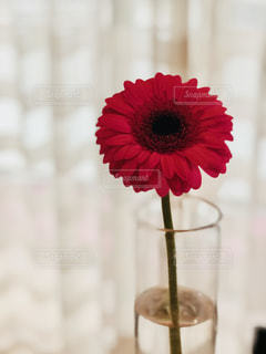 木漏れ日の中の赤い花の写真・画像素材[1082083]
