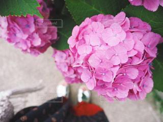 花の写真・画像素材[585724]