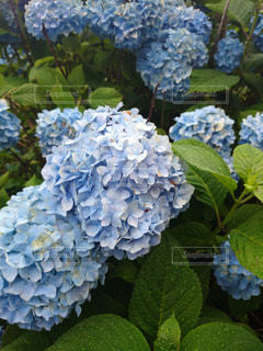 花の写真・画像素材[596088]