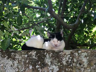 猫の写真・画像素材[597255]