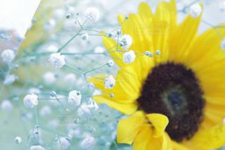 花束の写真・画像素材[585714]