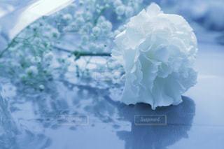 白の写真・画像素材[585884]