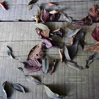 アートな枯葉の写真・画像素材[832027]