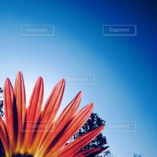 花と空のグラデーションの写真・画像素材[935474]