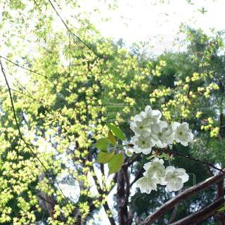 淡い春色の写真・画像素材[1032404]