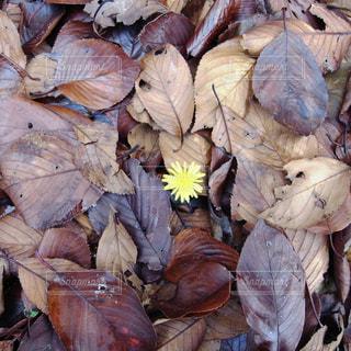 一点の花の写真・画像素材[1501288]