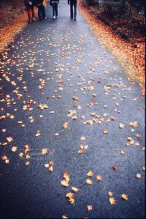 秋の足跡の写真・画像素材[1626015]