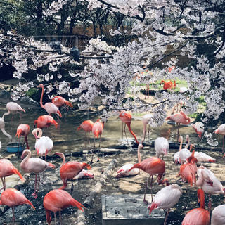 ピンク色の写真・画像素材[1976441]