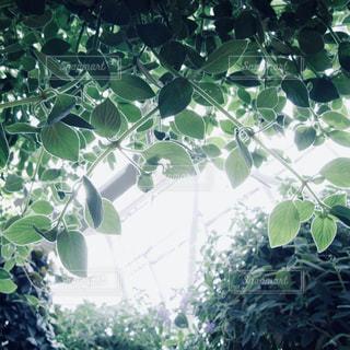 緑の写真・画像素材[2255779]