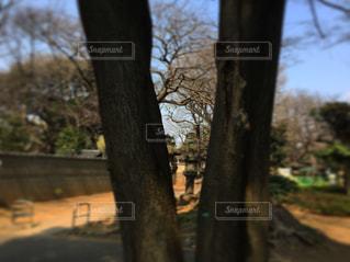 木の写真・画像素材[586151]