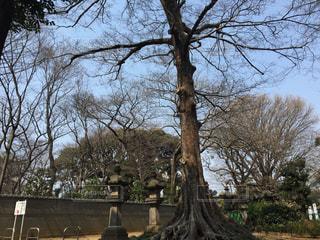 木の写真・画像素材[586233]