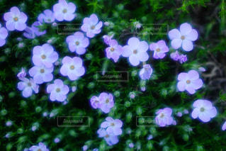 近くの花のアップの写真・画像素材[1193684]