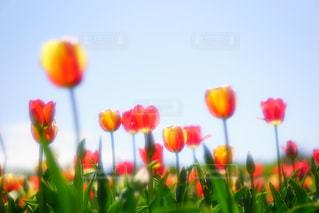 色とりどりの花のグループの写真・画像素材[1193686]