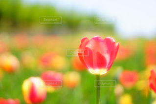 近くの花のアップの写真・画像素材[1193687]