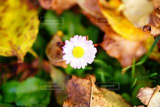 もうすぐ秋ですねの写真・画像素材[1567357]