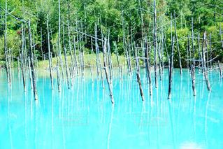 青い池の写真・画像素材[1567376]