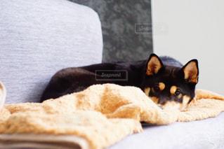 ベッドに横たわる猫の写真・画像素材[3023552]