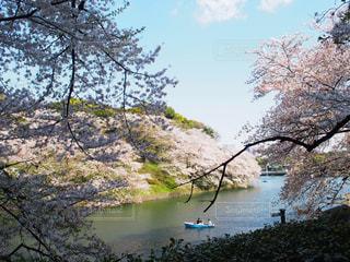 桜の写真・画像素材[587664]