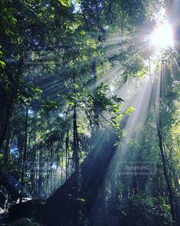 森のビューの写真・画像素材[1285688]