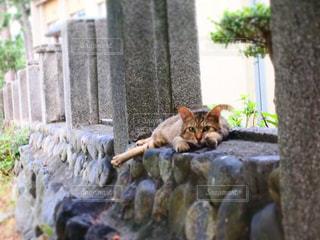 猫の写真・画像素材[203590]