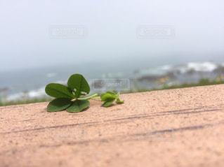 海の写真・画像素材[591744]