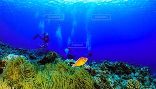 海の写真・画像素材[587928]
