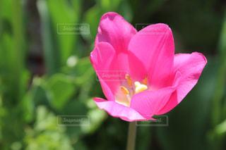 花の写真・画像素材[588003]