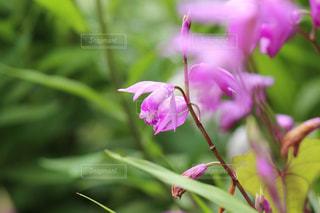 花の写真・画像素材[588005]