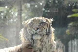 No.588257 動物園