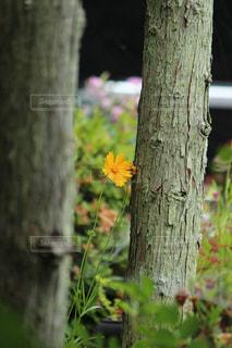 夏の写真・画像素材[618992]