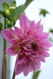 花の写真・画像素材[649354]