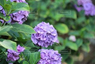 近くの花のアップの写真・画像素材[1314185]