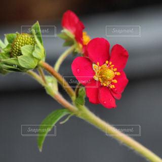 近くの花のアップの写真・画像素材[1553237]