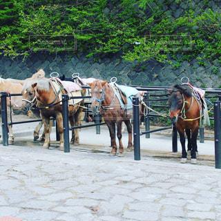 馬に乗る男馬車の写真・画像素材[721236]