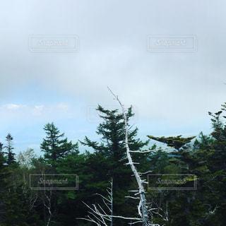 フォレスト内のツリーの写真・画像素材[721238]