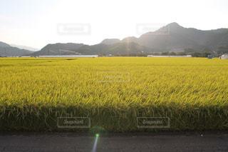 緑の野原で男の写真・画像素材[756616]