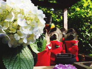 紫陽花の写真・画像素材[588528]