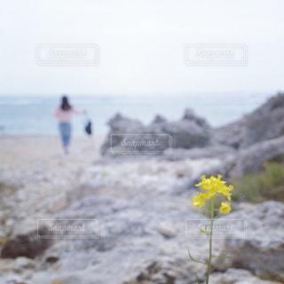 海の写真・画像素材[589718]