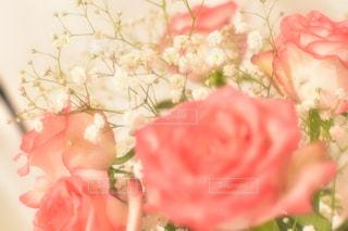 花の写真・画像素材[588670]