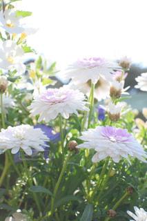 花の写真・画像素材[588688]