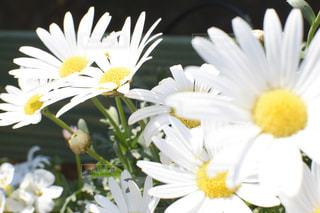 花の写真・画像素材[588689]