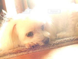 犬の写真・画像素材[589594]
