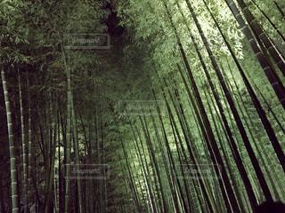 京都の写真・画像素材[589138]