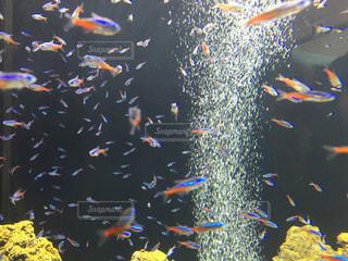 魚の写真・画像素材[590430]
