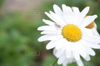 花の写真・画像素材[593774]